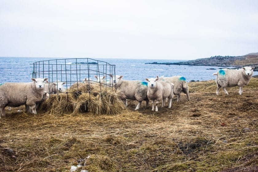 15 Photos that make you want to go to Shetland   WatchMeSee.com