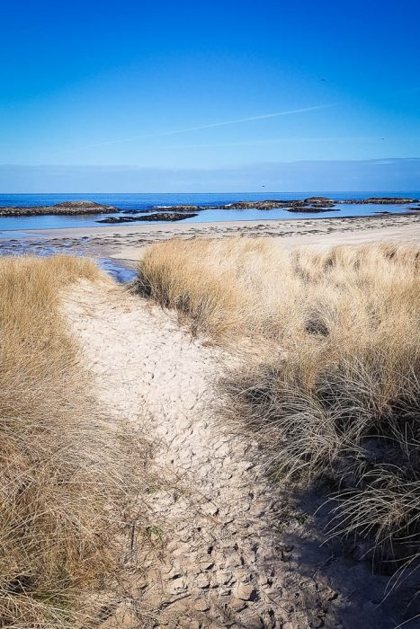 The sandy dunes of Cliadh Beach on Coll