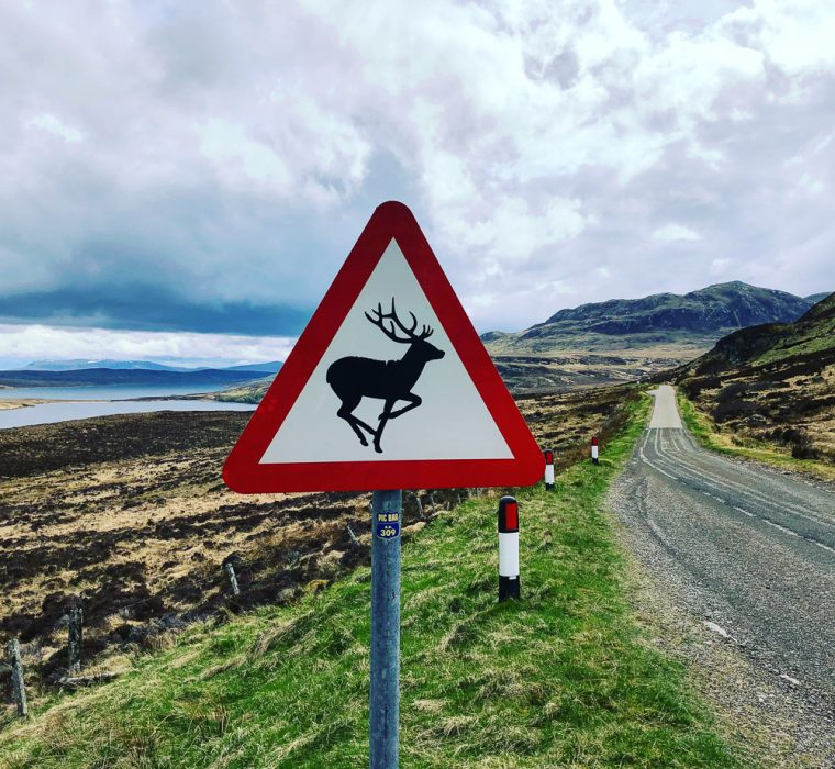 Road sign warning from deer in Scotland