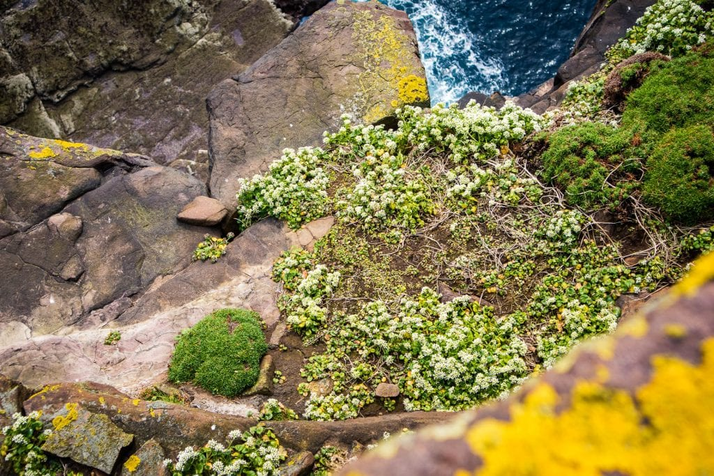 Flowers and cliffs