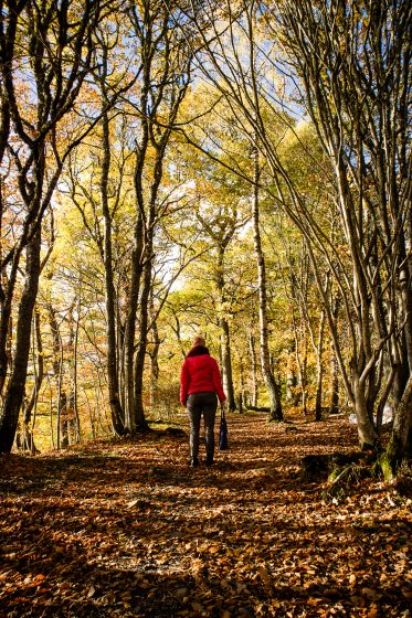 A woman standing in an autumn coloured woodland near Pitlochry