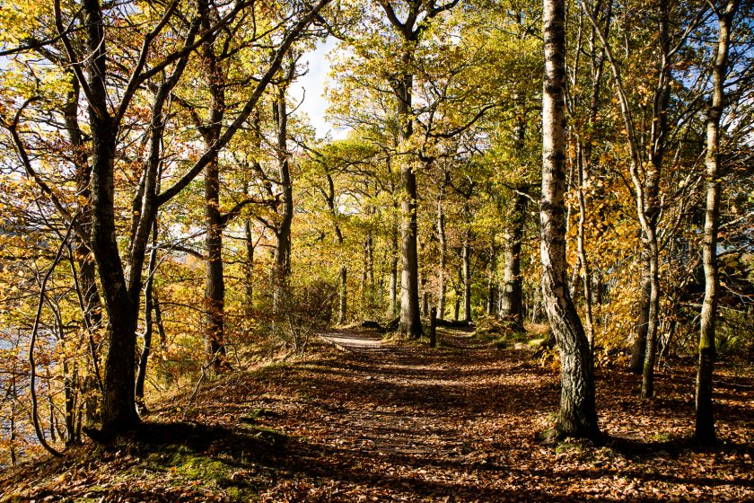 Woodlands in Pitlochry