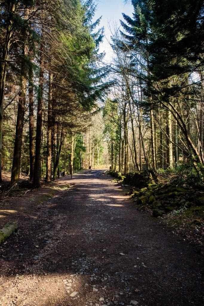 A broad track through a forest in Scotland.