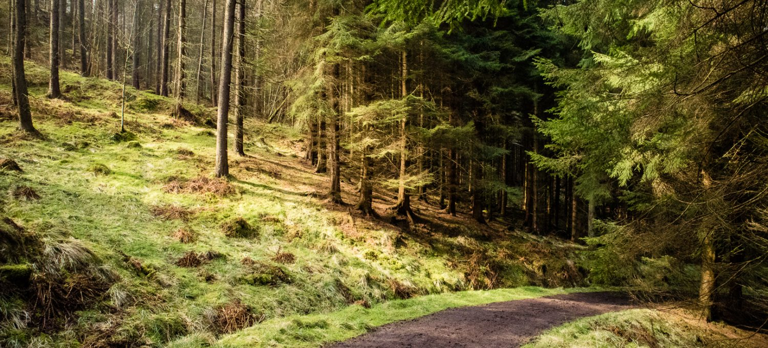 A hiking trail in a sunny woodland in Scotland.