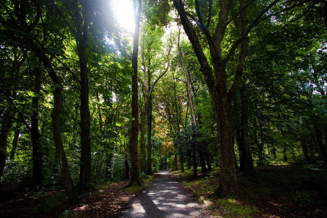 Pollok Park