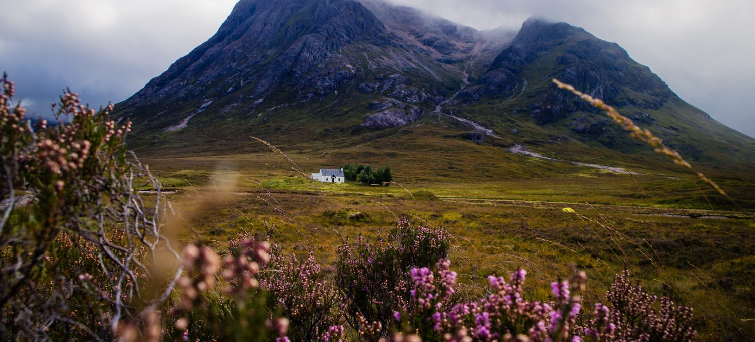 A lonely whiter cabin in front on a tall mountain and purple flowers blooming in Glencoe in Scotland.