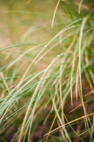 Grass with water droplets