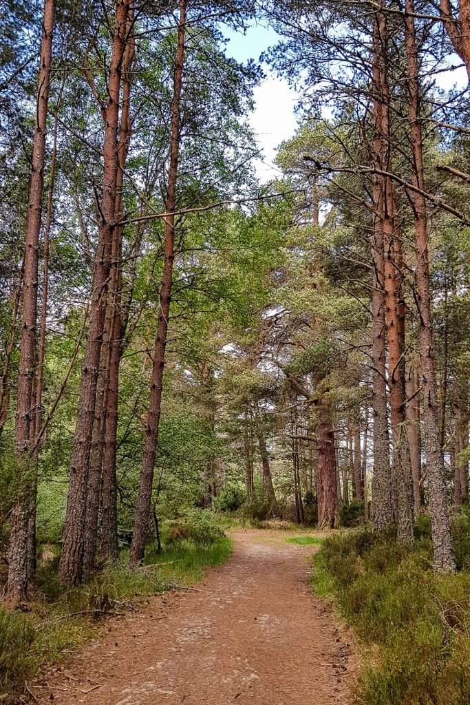 Caledonian Pine Forest near Nethy Bridge.