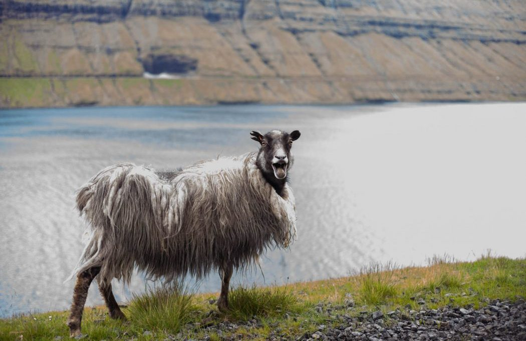 Want to learn Faroese before you head off on your big adventure on the Faroe Islands? Faroe Islands Translate teaches you the most important phrases!